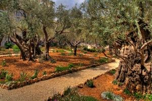 jardim getsemani