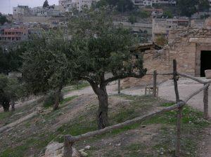 ISRAEL_30NOV_10DEZ_2005_PARTE_1_2005-12-03 120323