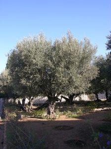 ISRAEL_30NOV_10DEZ_2005_PARTE_2_2005-12-07 051146